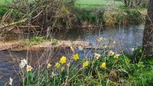 RIVER-WITH-DAFFS-for-web
